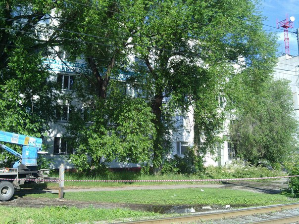 Спил дерева в городе
