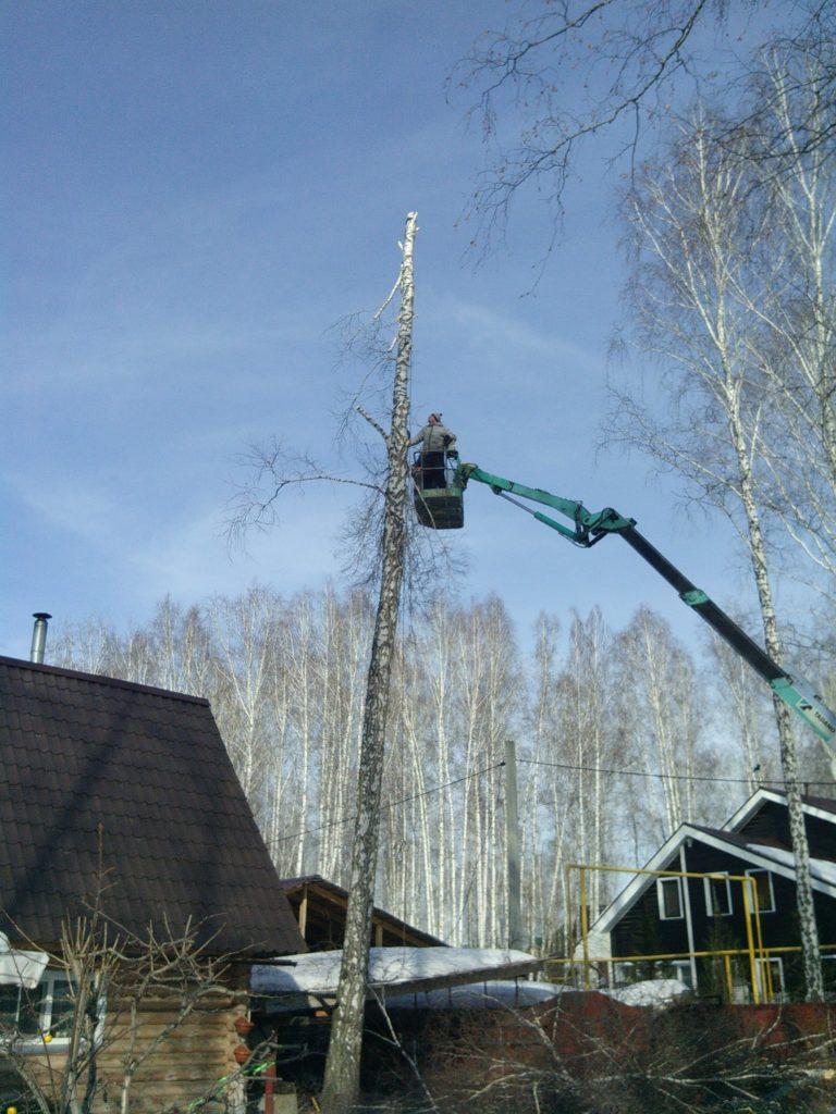 спил дерева на даче