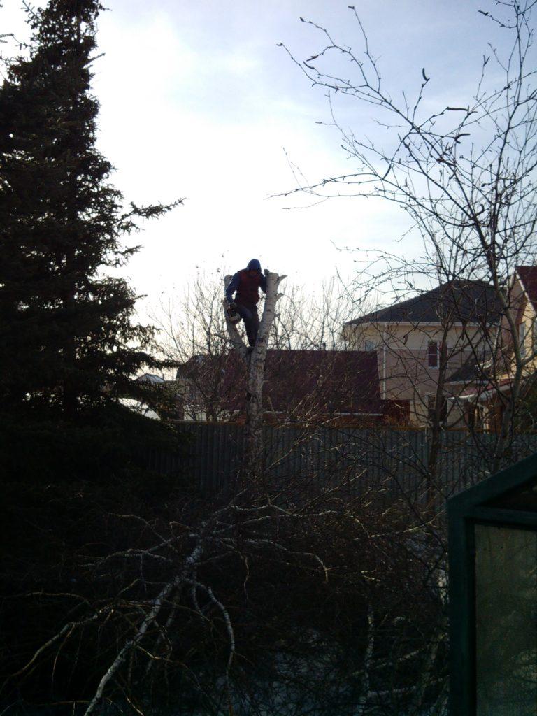 спил альпинистом деревьев