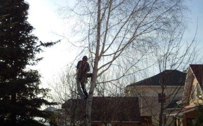 спил дерева альпинистом